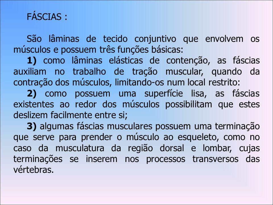 FÁSCIAS :São lâminas de tecido conjuntivo que envolvem os músculos e possuem três funções básicas: