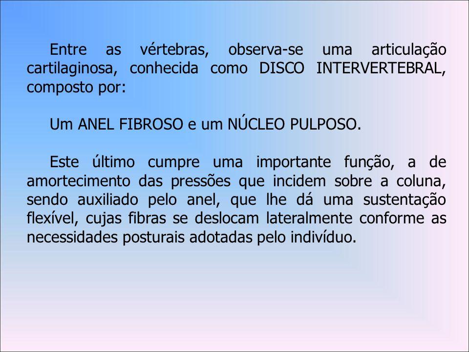 Entre as vértebras, observa-se uma articulação cartilaginosa, conhecida como DISCO INTERVERTEBRAL, composto por: