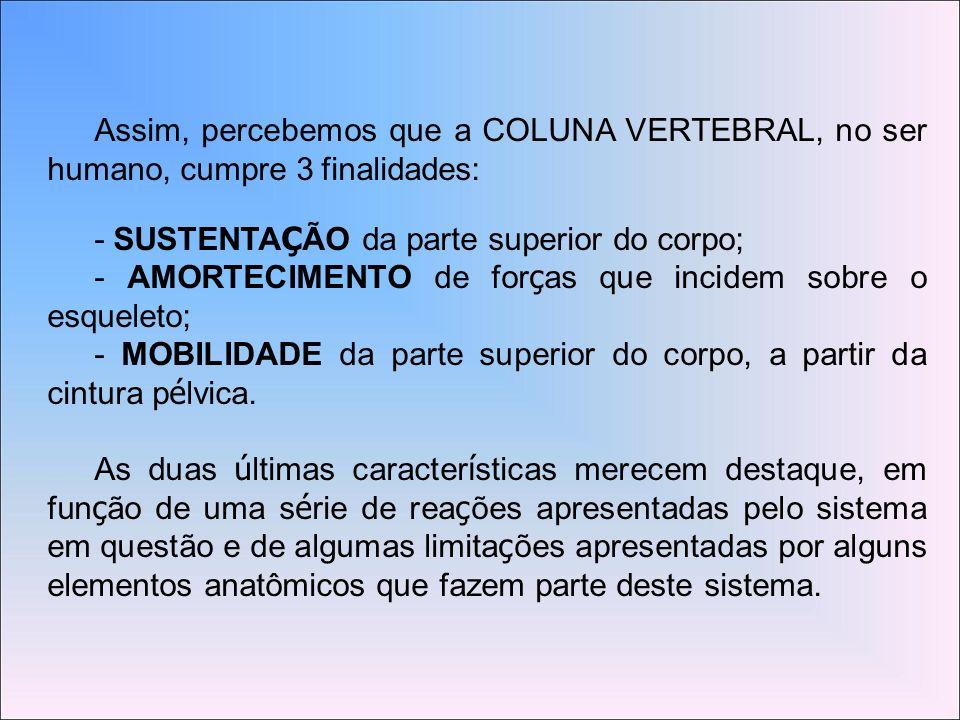 Assim, percebemos que a COLUNA VERTEBRAL, no ser humano, cumpre 3 finalidades: