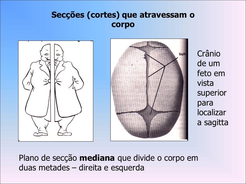 Secções (cortes) que atravessam o corpo
