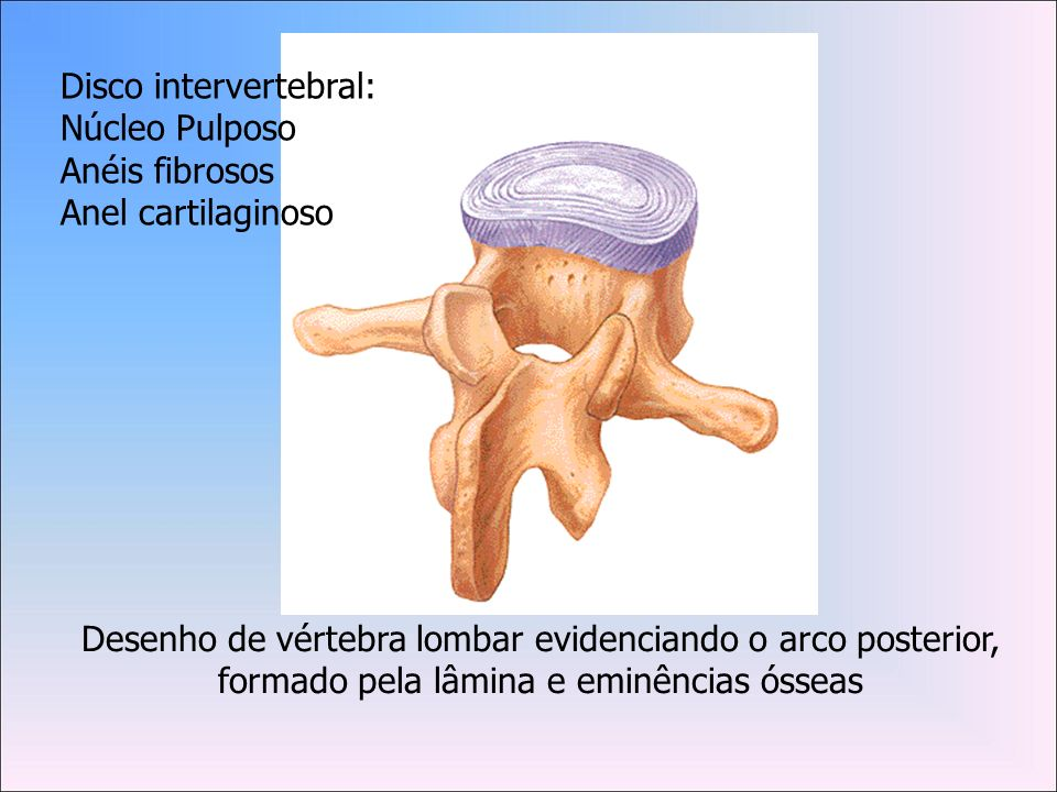 Disco intervertebral:
