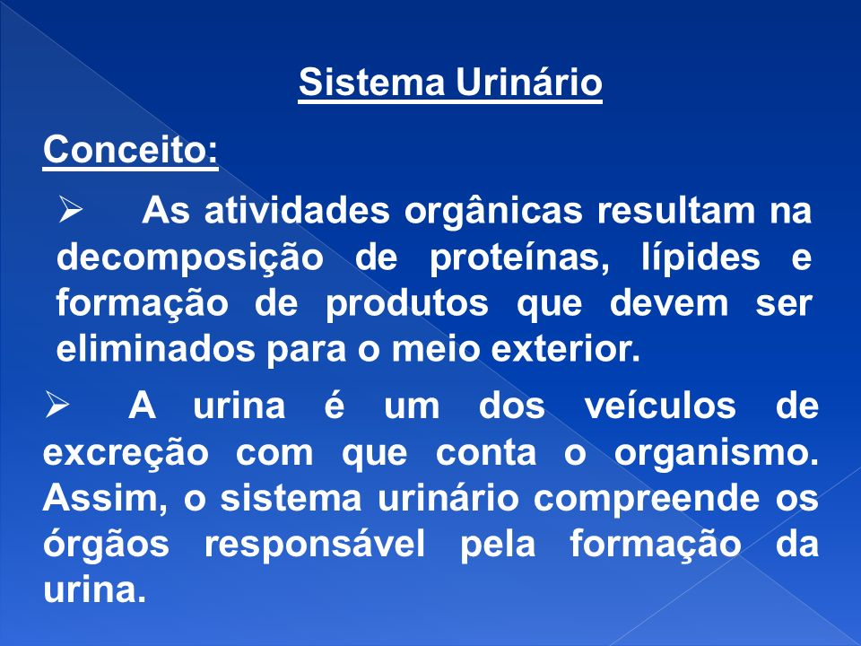 Sistema Urinário Conceito: