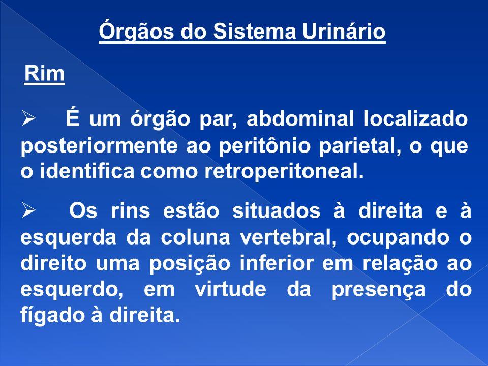 Órgãos do Sistema Urinário