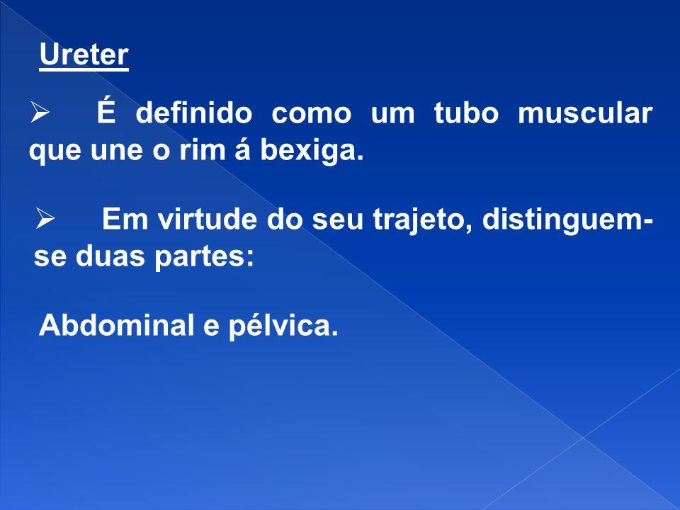 Ureter É definido como um tubo muscular que une o rim á bexiga. Em virtude do seu trajeto, distinguem-se duas partes: