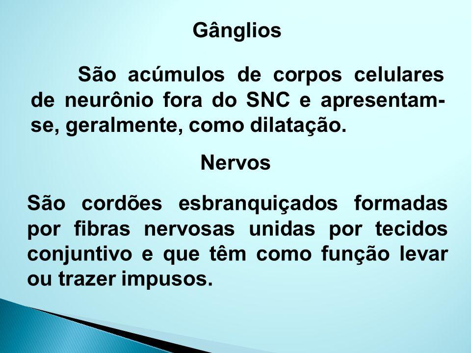 Gânglios São acúmulos de corpos celulares de neurônio fora do SNC e apresentam-se, geralmente, como dilatação.
