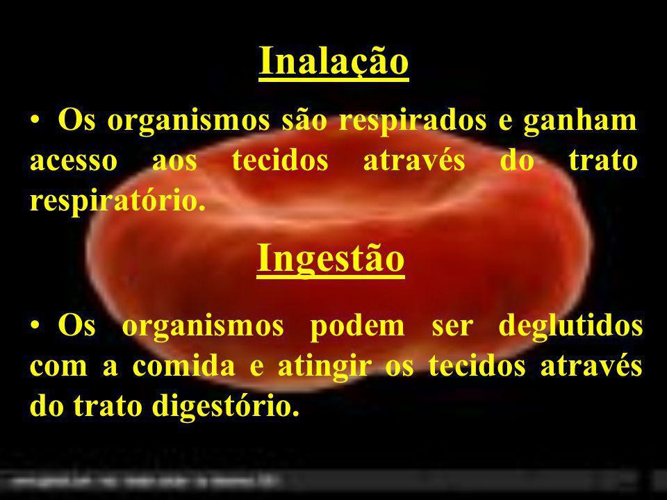 Inalação Os organismos são respirados e ganham acesso aos tecidos através do trato respiratório. Ingestão.
