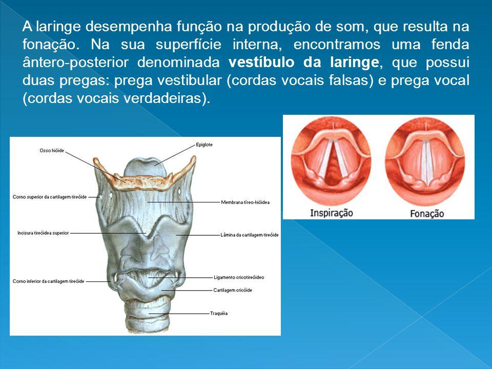 A laringe desempenha função na produção de som, que resulta na fonação