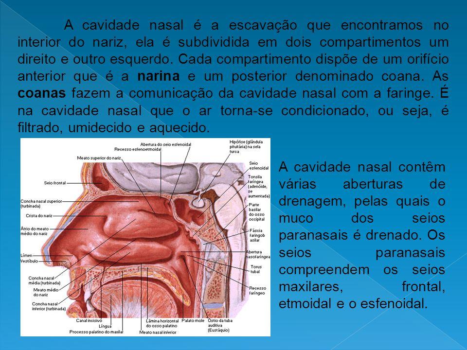 A cavidade nasal é a escavação que encontramos no interior do nariz, ela é subdividida em dois compartimentos um direito e outro esquerdo. Cada compartimento dispõe de um orifício anterior que é a narina e um posterior denominado coana. As coanas fazem a comunicação da cavidade nasal com a faringe. É na cavidade nasal que o ar torna-se condicionado, ou seja, é filtrado, umidecido e aquecido.