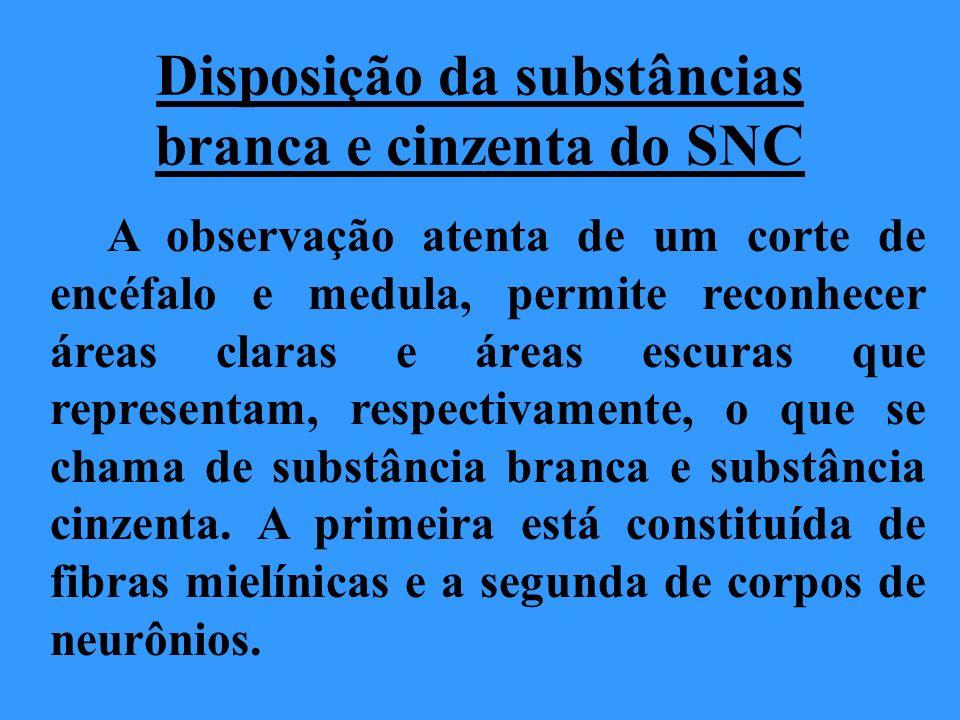 Disposição da substâncias branca e cinzenta do SNC