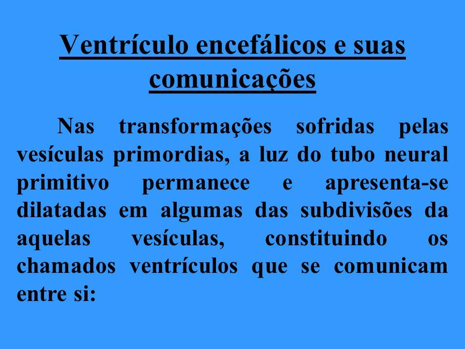 Ventrículo encefálicos e suas comunicações