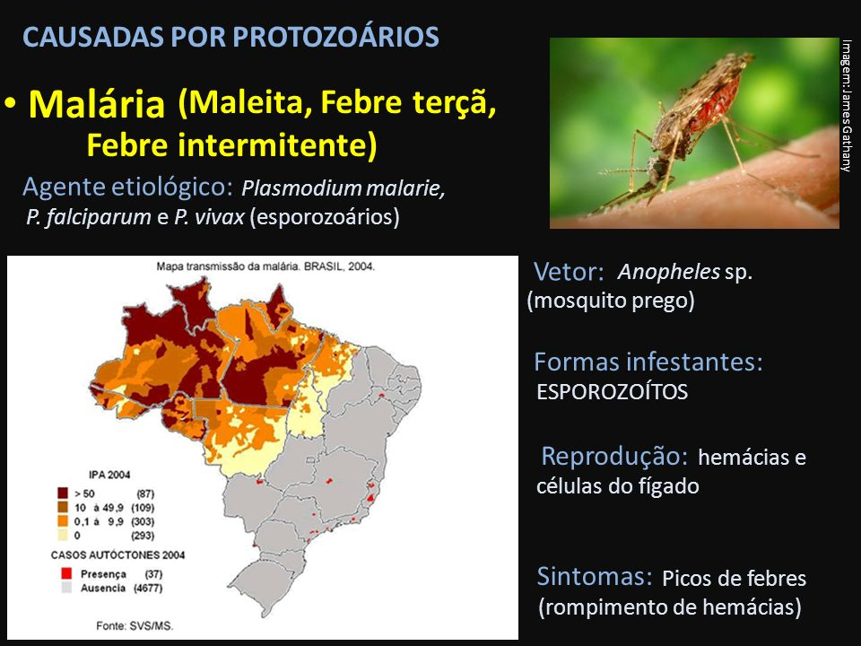 Malária (Maleita, Febre terçã, Febre intermitente)