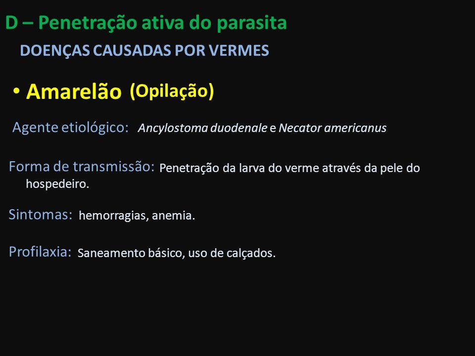 Amarelão D – Penetração ativa do parasita (Opilação)