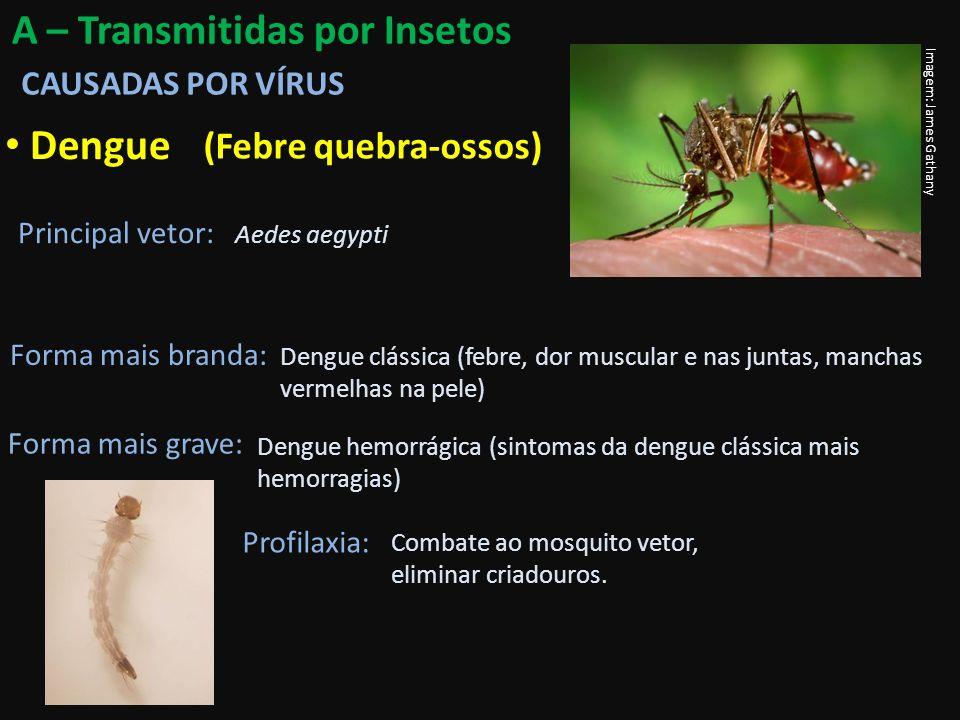 Dengue A – Transmitidas por Insetos (Febre quebra-ossos)