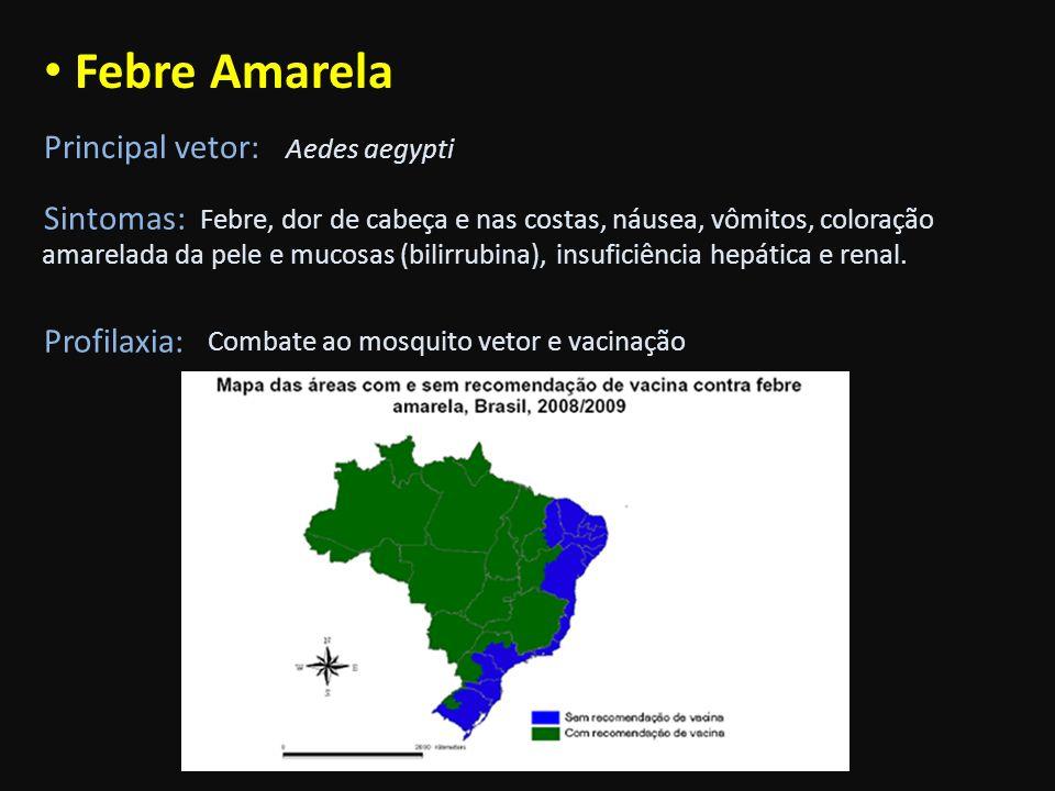 Febre Amarela Principal vetor: Sintomas: Profilaxia: Aedes aegypti