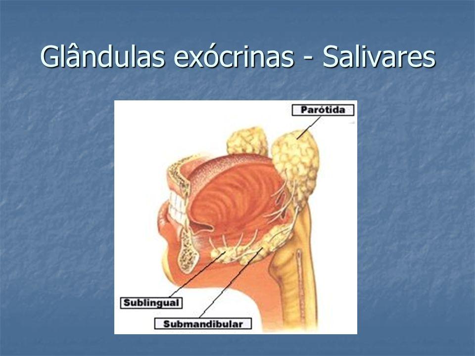 Glândulas exócrinas - Salivares