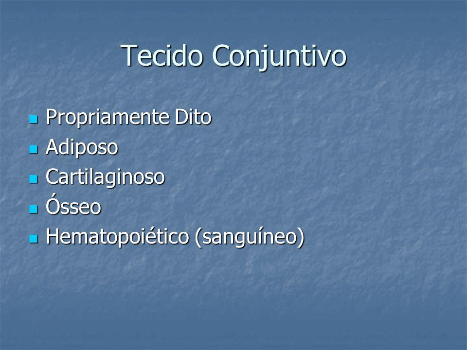 Tecido Conjuntivo Propriamente Dito Adiposo Cartilaginoso Ósseo