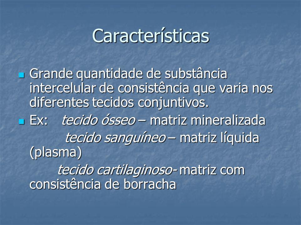 Características Grande quantidade de substância intercelular de consistência que varia nos diferentes tecidos conjuntivos.