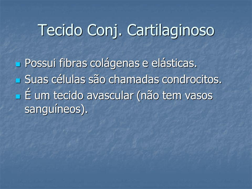 Tecido Conj. Cartilaginoso