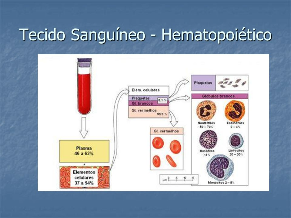 Tecido Sanguíneo - Hematopoiético