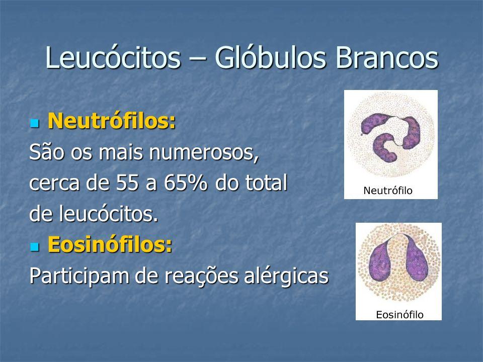 Leucócitos – Glóbulos Brancos