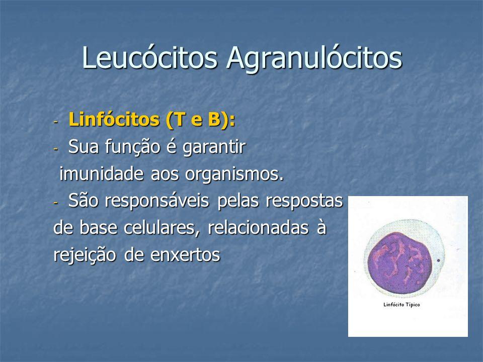 Leucócitos Agranulócitos
