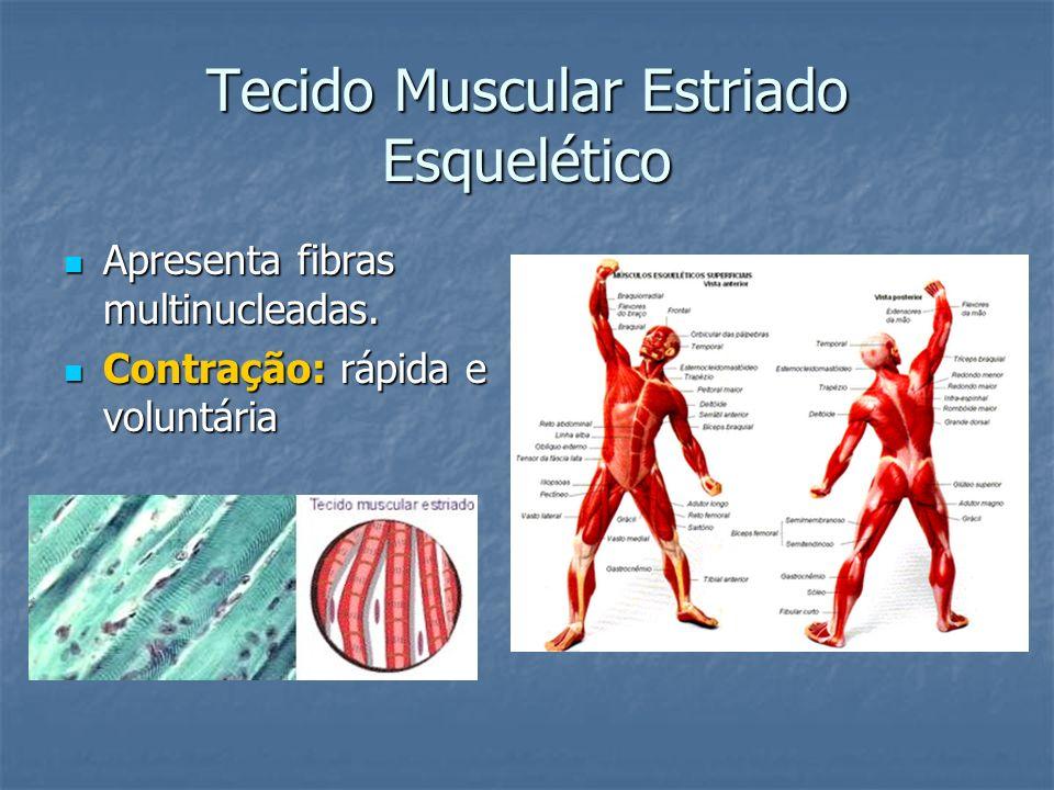 Tecido Muscular Estriado Esquelético