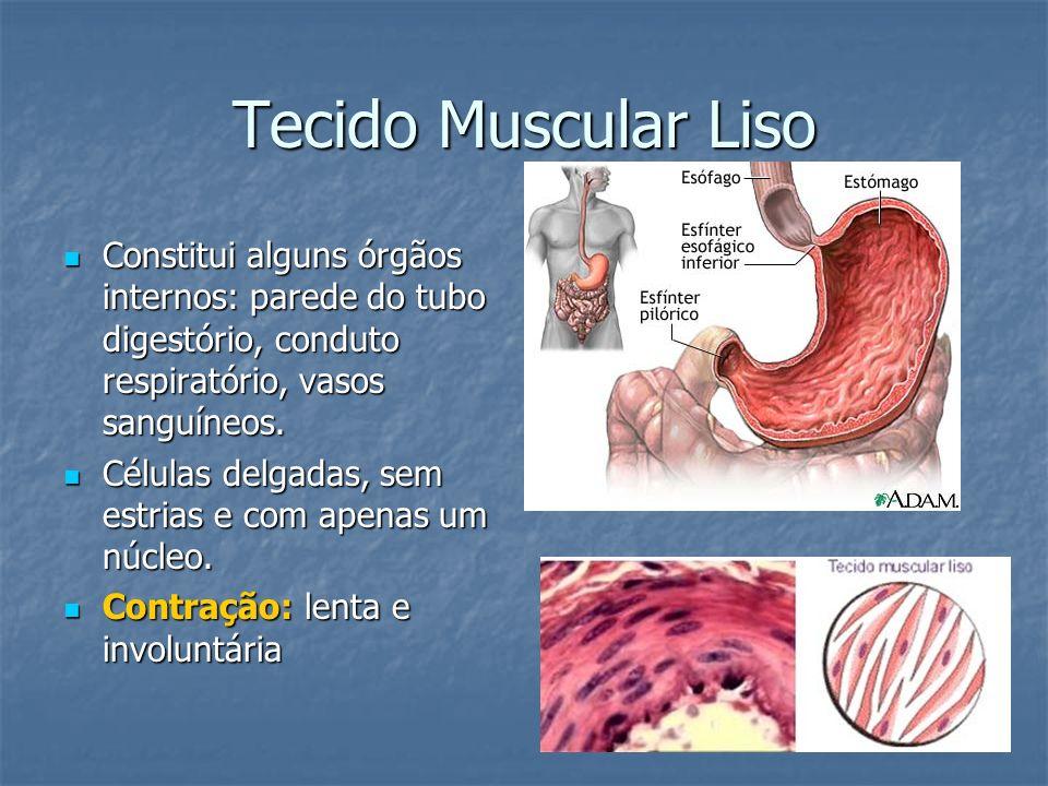 Tecido Muscular Liso Constitui alguns órgãos internos: parede do tubo digestório, conduto respiratório, vasos sanguíneos.