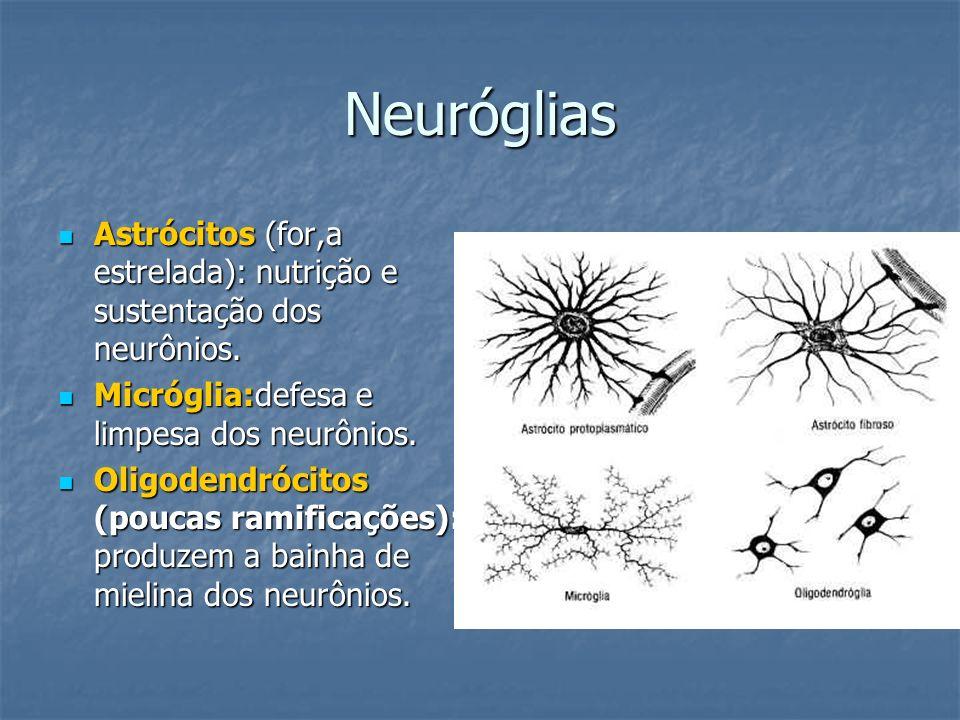 Neuróglias Astrócitos (for,a estrelada): nutrição e sustentação dos neurônios. Micróglia:defesa e limpesa dos neurônios.