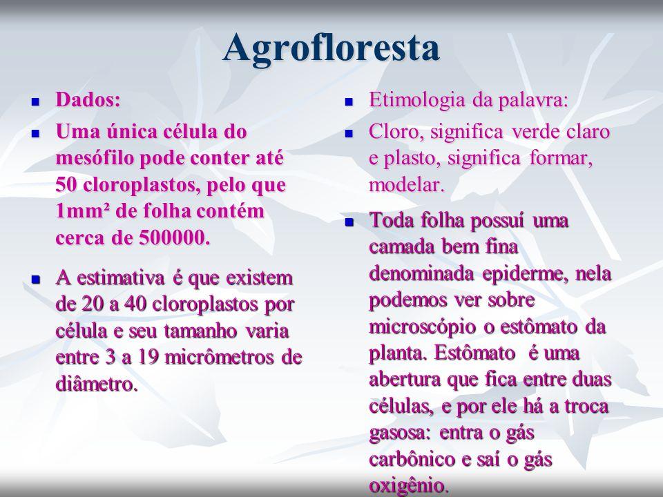 Agrofloresta Dados: Uma única célula do mesófilo pode conter até 50 cloroplastos, pelo que 1mm² de folha contém cerca de 500000.
