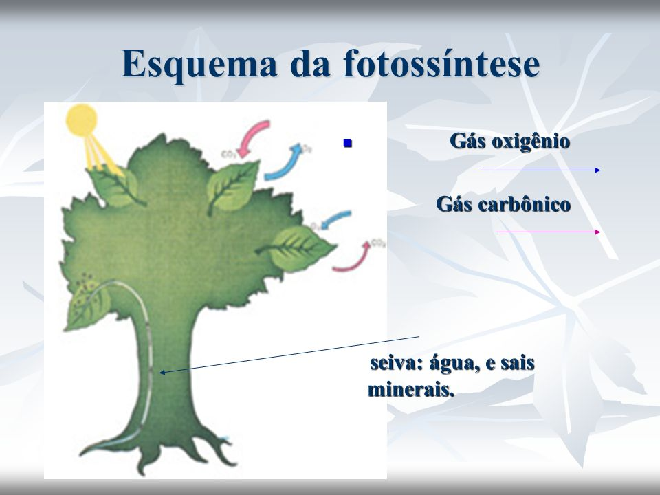 Esquema da fotossíntese