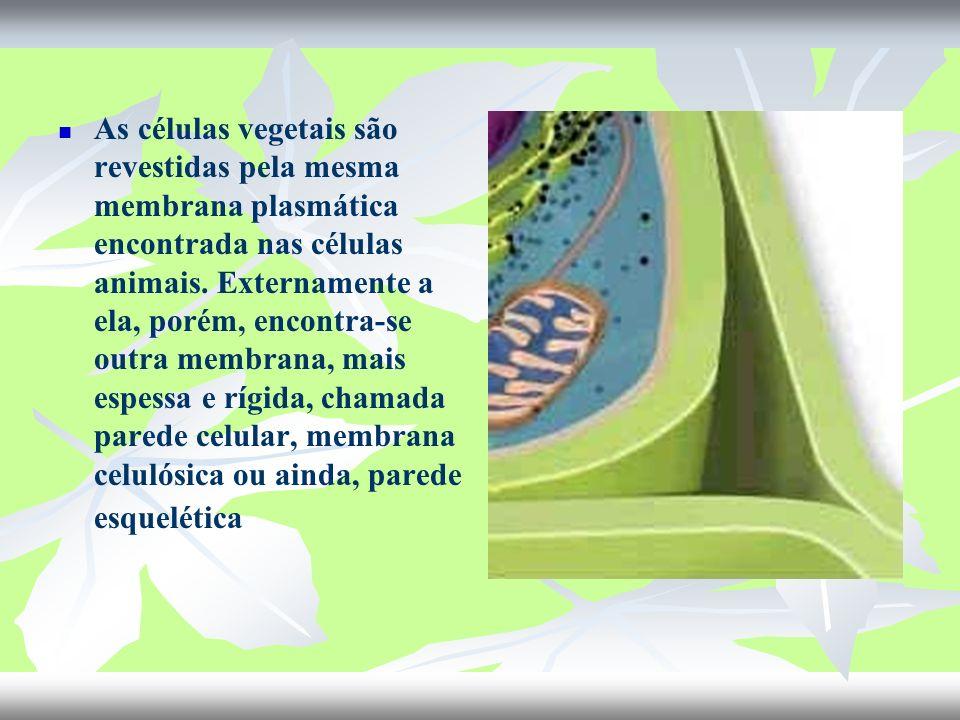 As células vegetais são revestidas pela mesma membrana plasmática encontrada nas células animais.