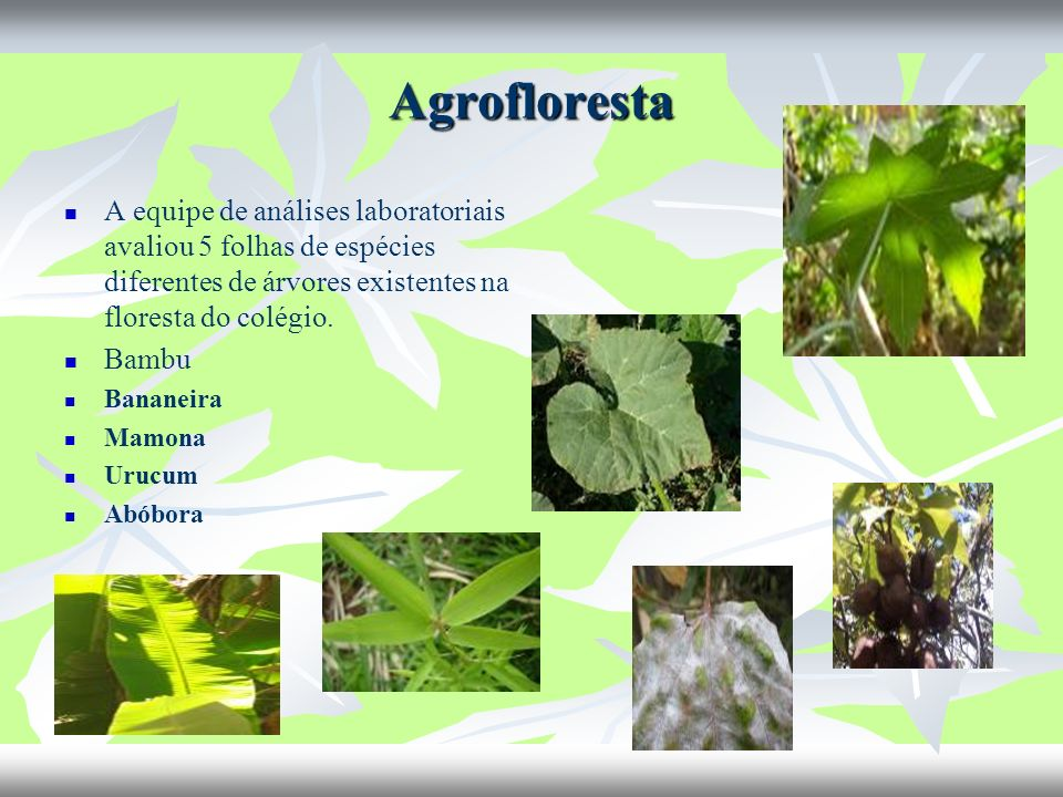 Agrofloresta A equipe de análises laboratoriais avaliou 5 folhas de espécies diferentes de árvores existentes na floresta do colégio.