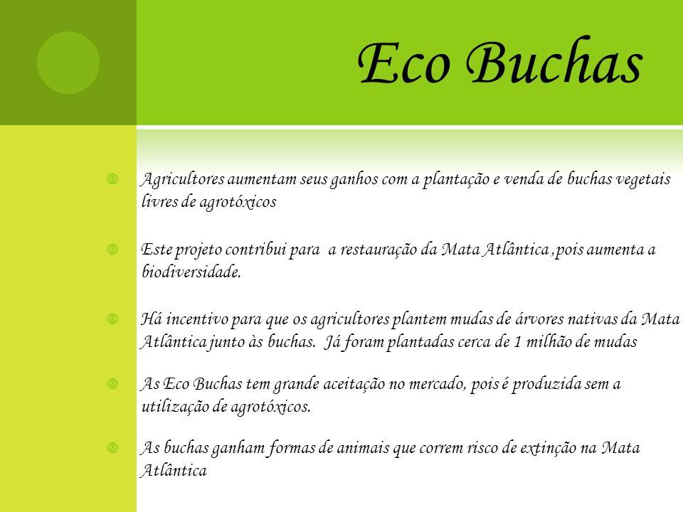 Eco Buchas Agricultores aumentam seus ganhos com a plantação e venda de buchas vegetais livres de agrotóxicos.