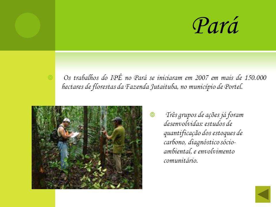 Pará Os trabalhos do IPÊ no Pará se iniciaram em 2007 em mais de 150.000 hectares de florestas da Fazenda Jutaituba, no município de Portel.