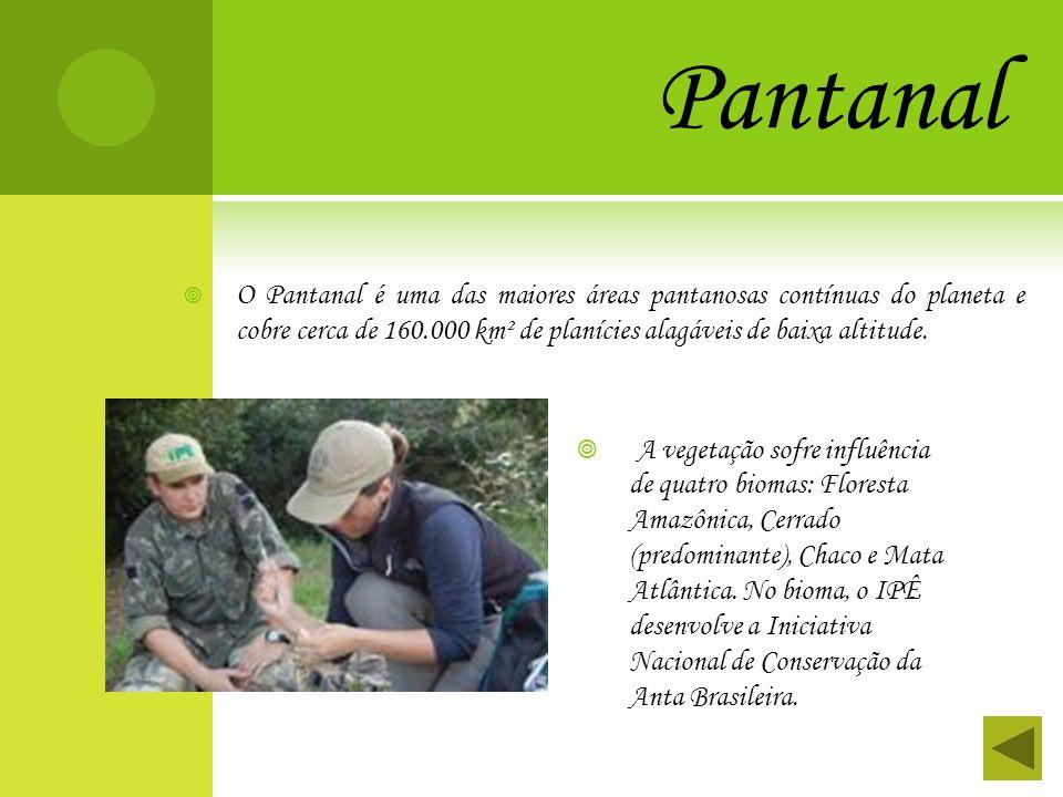 Pantanal O Pantanal é uma das maiores áreas pantanosas contínuas do planeta e cobre cerca de 160.000 km² de planícies alagáveis de baixa altitude.