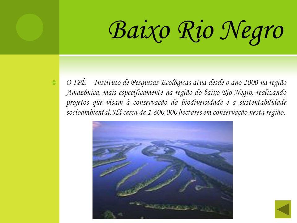 Baixo Rio Negro