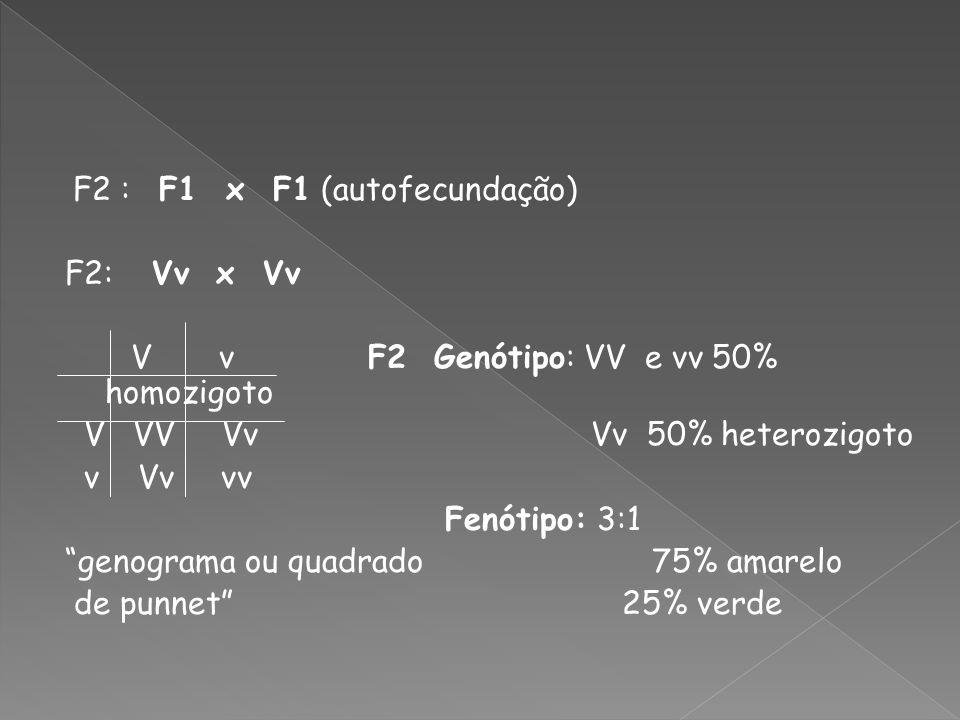 V v F2 Genótipo: VV e vv 50% homozigoto V VV Vv Vv 50% heterozigoto