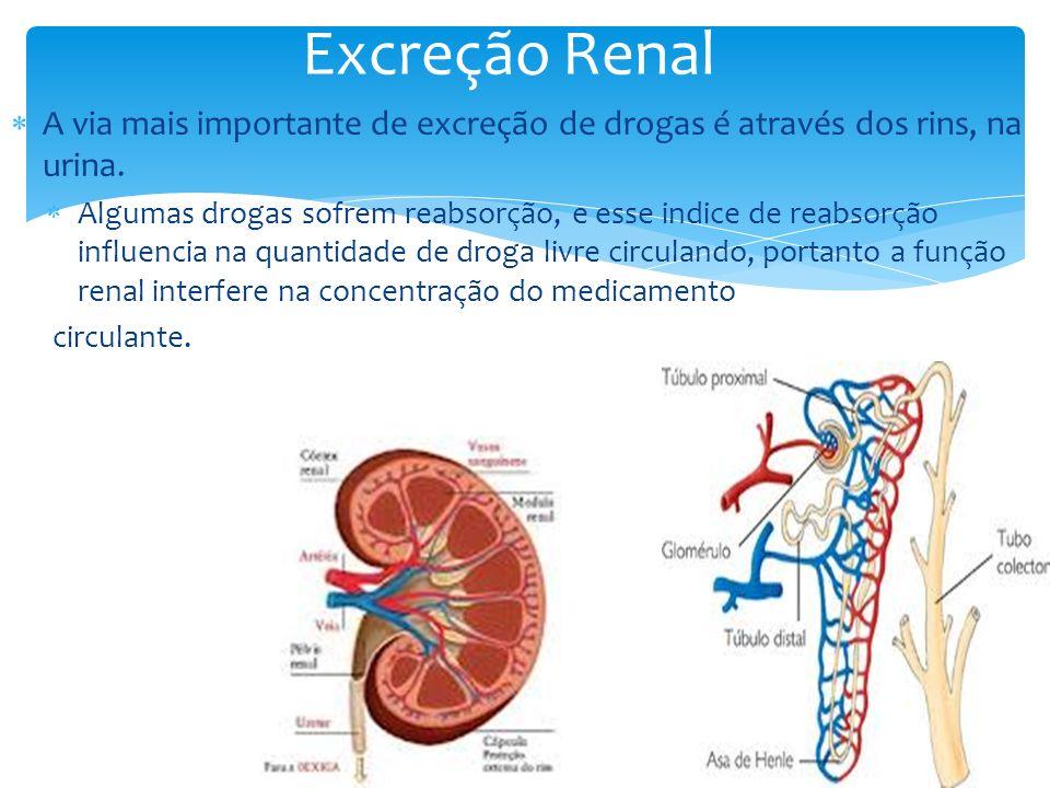 Excreção RenalA via mais importante de excreção de drogas é através dos rins, na urina.
