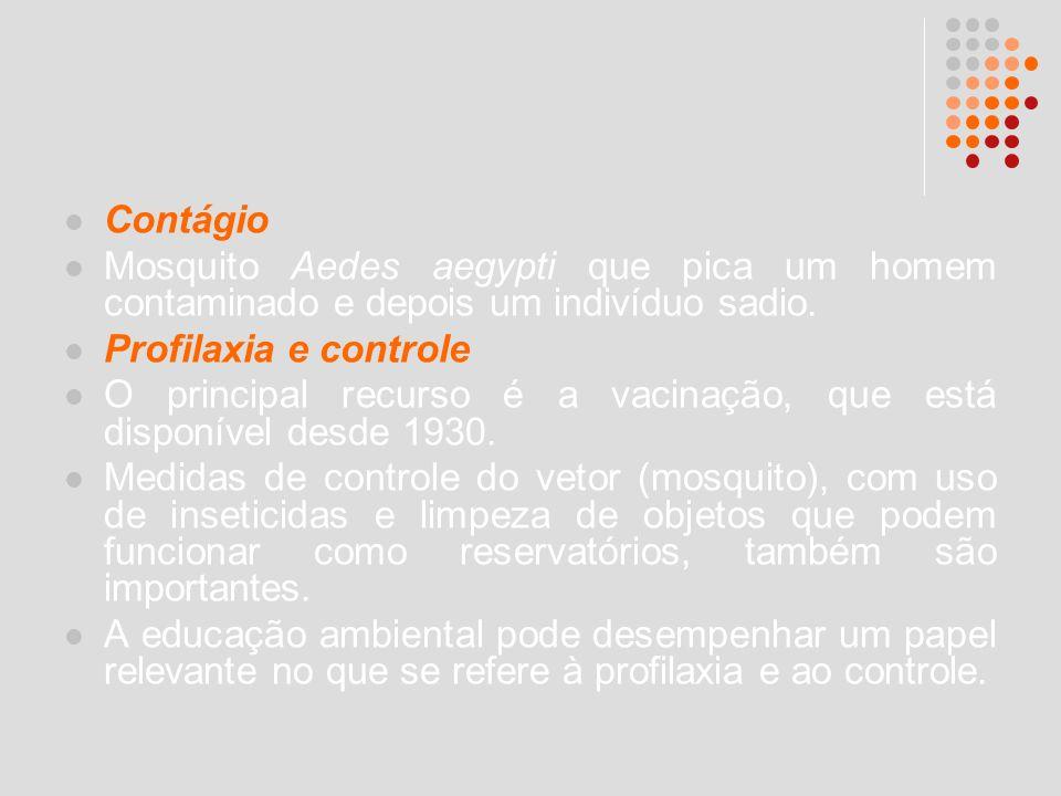 Contágio Mosquito Aedes aegypti que pica um homem contaminado e depois um indivíduo sadio. Profilaxia e controle.