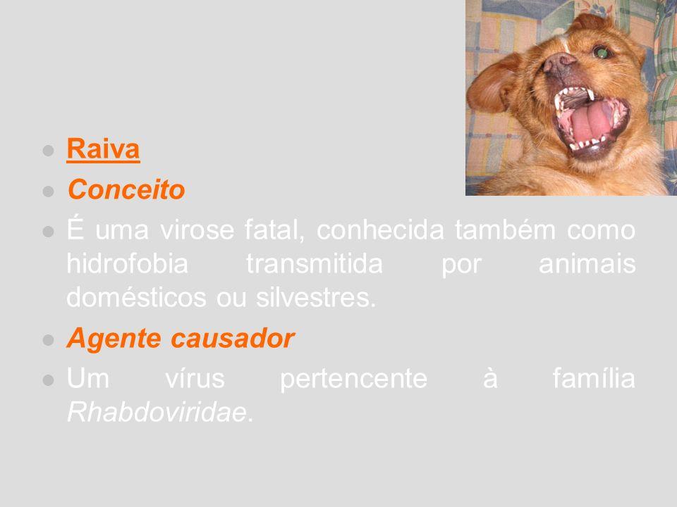 Raiva Conceito. É uma virose fatal, conhecida também como hidrofobia transmitida por animais domésticos ou silvestres.