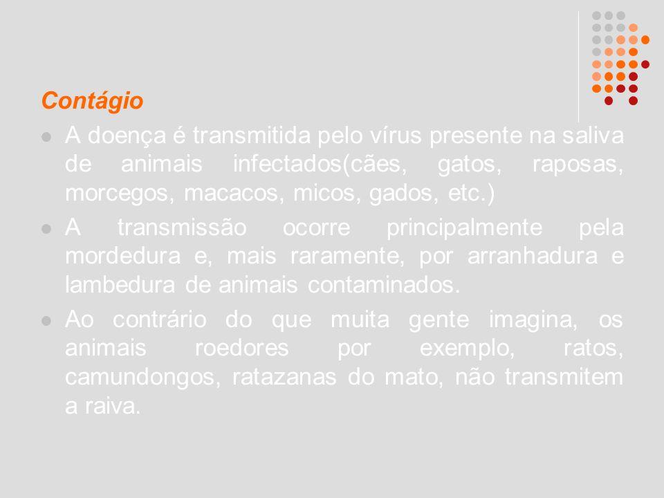 Contágio A doença é transmitida pelo vírus presente na saliva de animais infectados(cães, gatos, raposas, morcegos, macacos, micos, gados, etc.)
