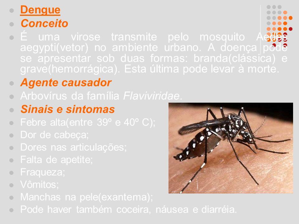 Arbovírus da família Flaviviridae. Sinais e sintomas