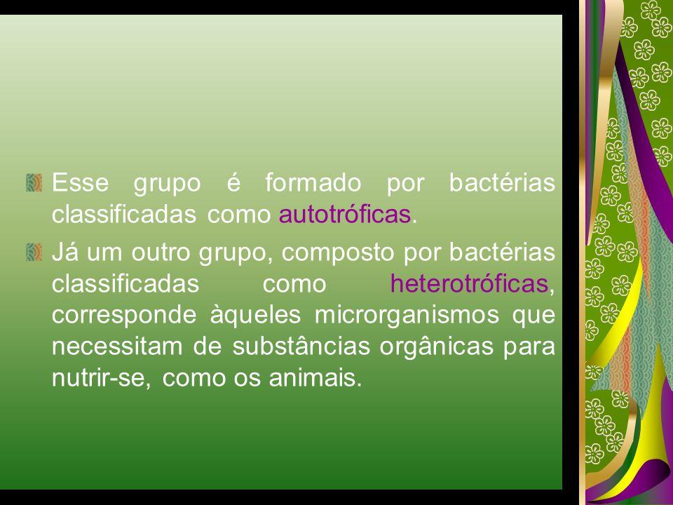 Esse grupo é formado por bactérias classificadas como autotróficas.