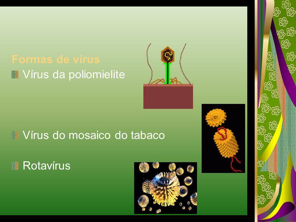 Formas de vírus Vírus da poliomielite Vírus do mosaico do tabaco Rotavírus