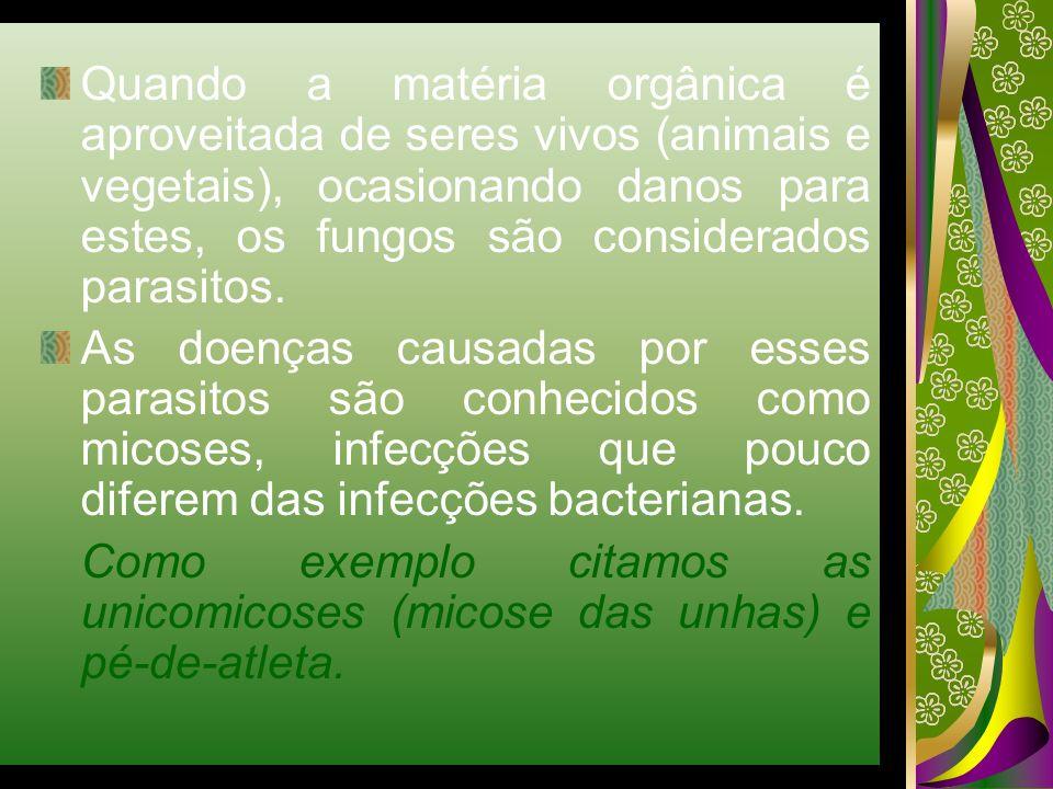 Quando a matéria orgânica é aproveitada de seres vivos (animais e vegetais), ocasionando danos para estes, os fungos são considerados parasitos.