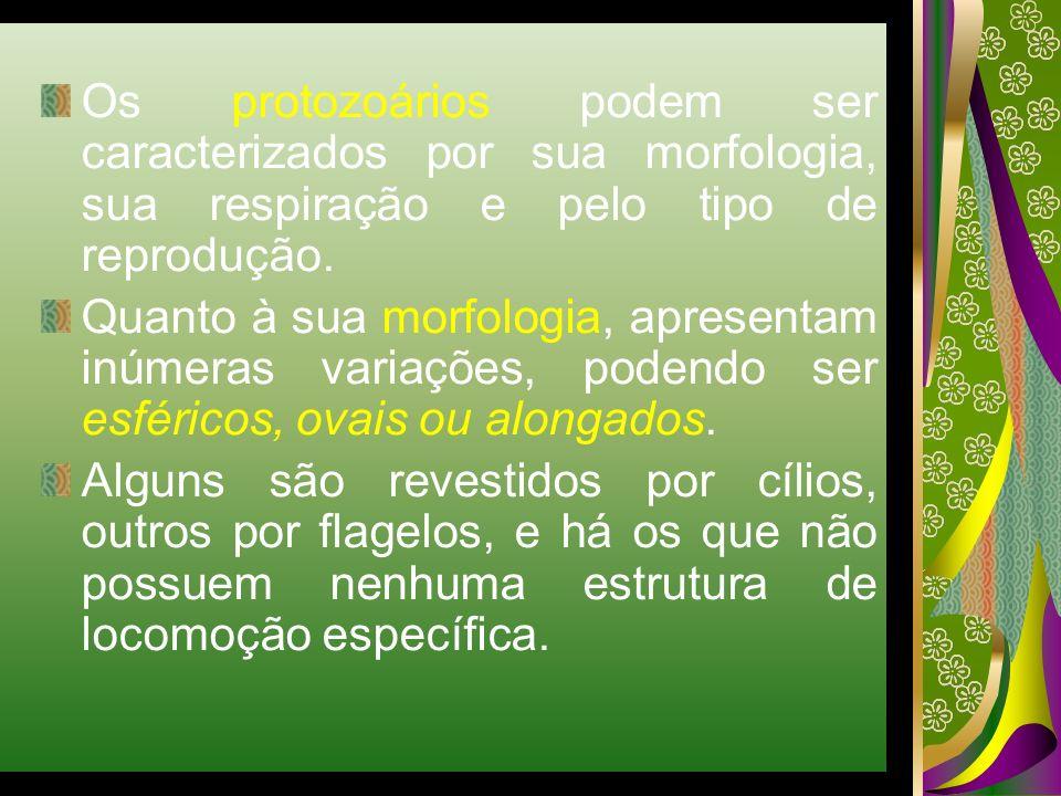 Os protozoários podem ser caracterizados por sua morfologia, sua respiração e pelo tipo de reprodução.