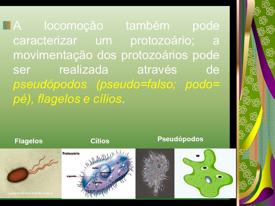 A locomoção também pode caracterizar um protozoário; a movimentação dos protozoários pode ser realizada através de pseudópodos (pseudo=falso; podo= pé), flagelos e cílios.