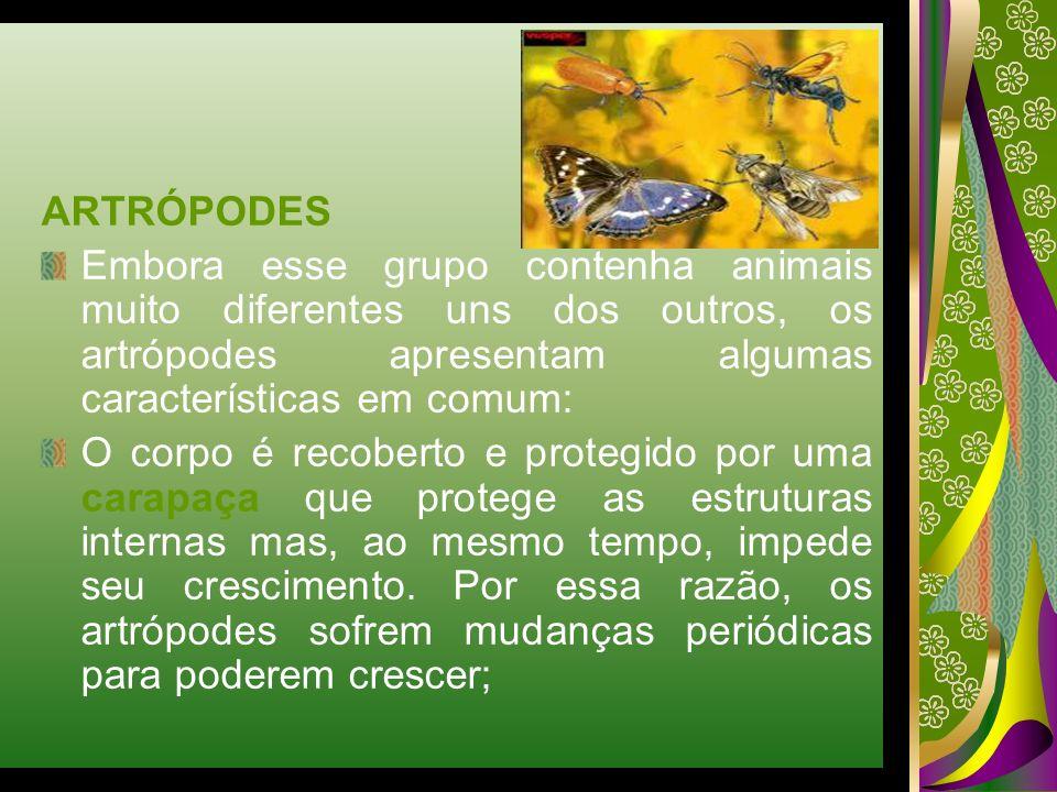ARTRÓPODES Embora esse grupo contenha animais muito diferentes uns dos outros, os artrópodes apresentam algumas características em comum: