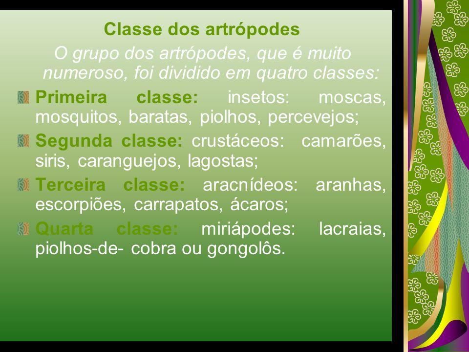 Classe dos artrópodes O grupo dos artrópodes, que é muito numeroso, foi dividido em quatro classes: