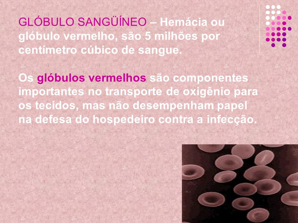 GLÓBULO SANGÜÍNEO – Hemácia ou glóbulo vermelho, são 5 milhões por centímetro cúbico de sangue.